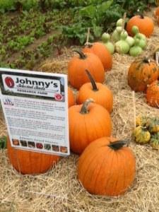 Johnny'selected pumpkins