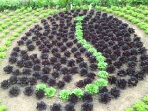 Lettuce art